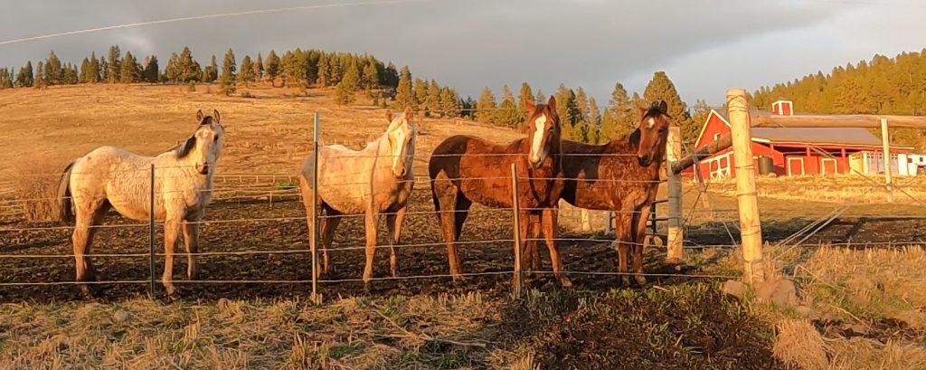 Four Foals